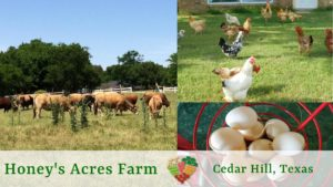 Honey's Acres Farm - Farm Tour @ Honey's Acres Farm | Cedar Hill | Texas | United States