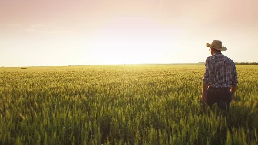 Photo of farmer walking though the field