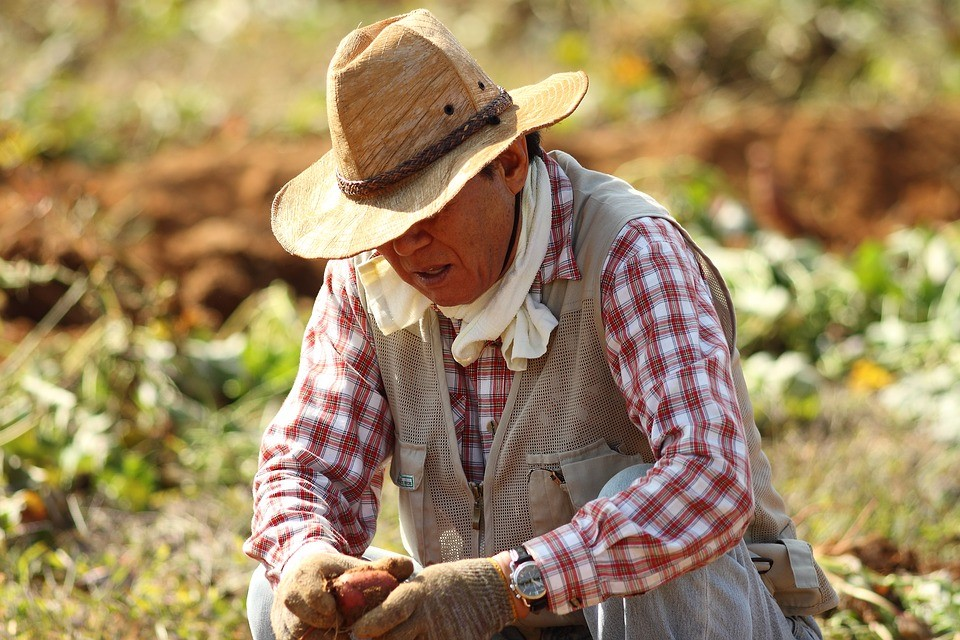 Photo of a farmer sitting down in a field with a vegetable in his hand